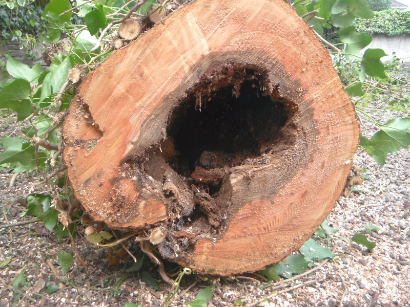 Tree Cobh