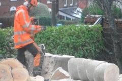 Tree Work Cobh