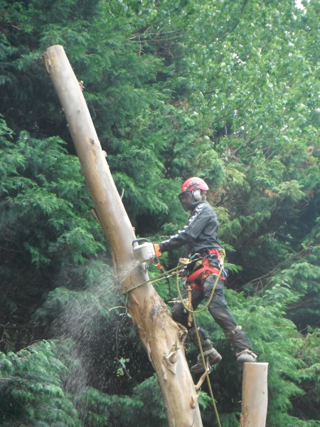 Advanced tree care 045