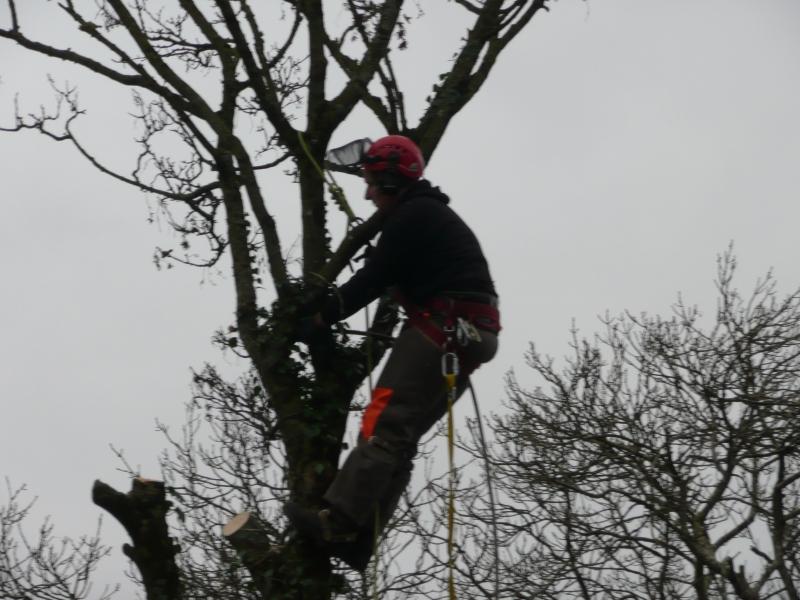 Tree Climbing cobh