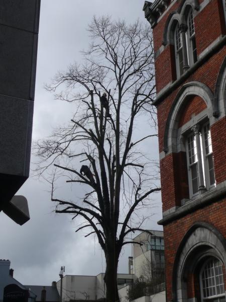 Tree Climbing paul st