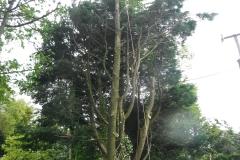 Advanced tree care 044
