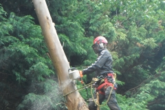 Advanced tree care 045