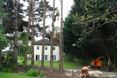 Tree Felling Glanmire