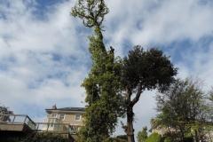 Tree Climbing Passage west