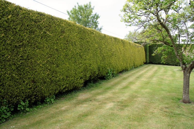 hedge trimming tree care