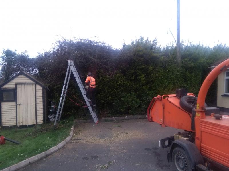 hedge cutting companys