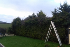 Hedge trimming east cork
