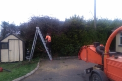 hedge cutting companys
