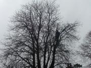 Tree Work Blackrock