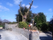 Tree Removal East Cork
