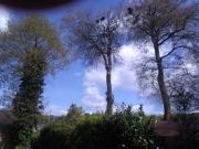 Tree Work Carrigaline
